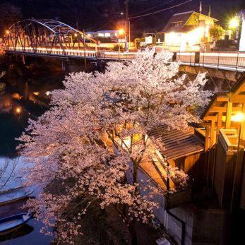 十津川温泉 庵の湯桜